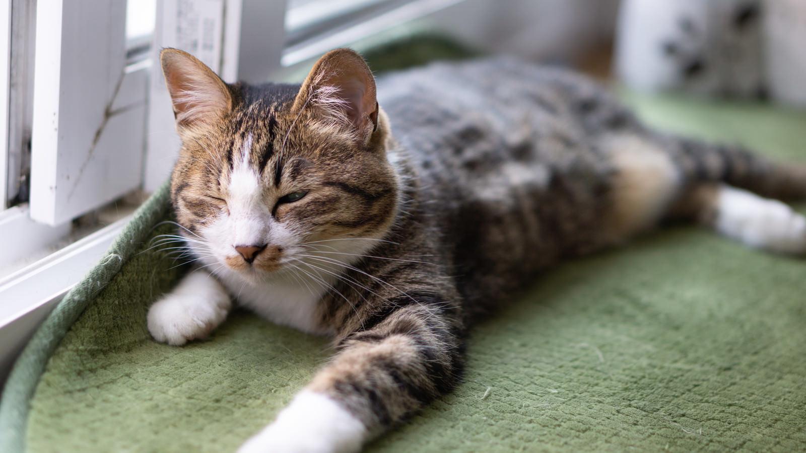 「昼過ぎまで寝てしまい後悔する猫」の写真
