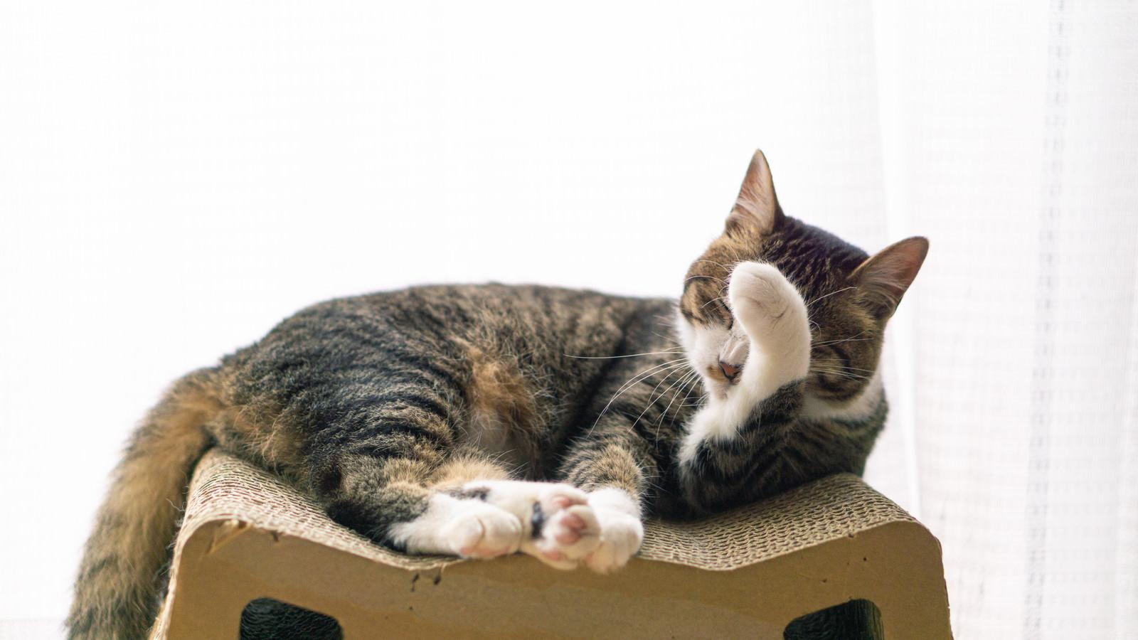 「のんびりする猫」の写真