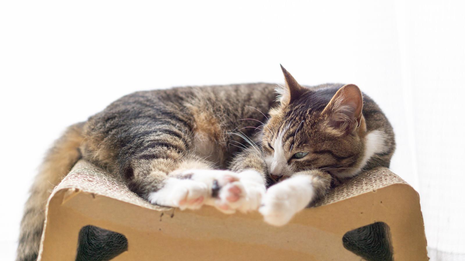 「足を伸ばして昼寝するにゃんこ」の写真