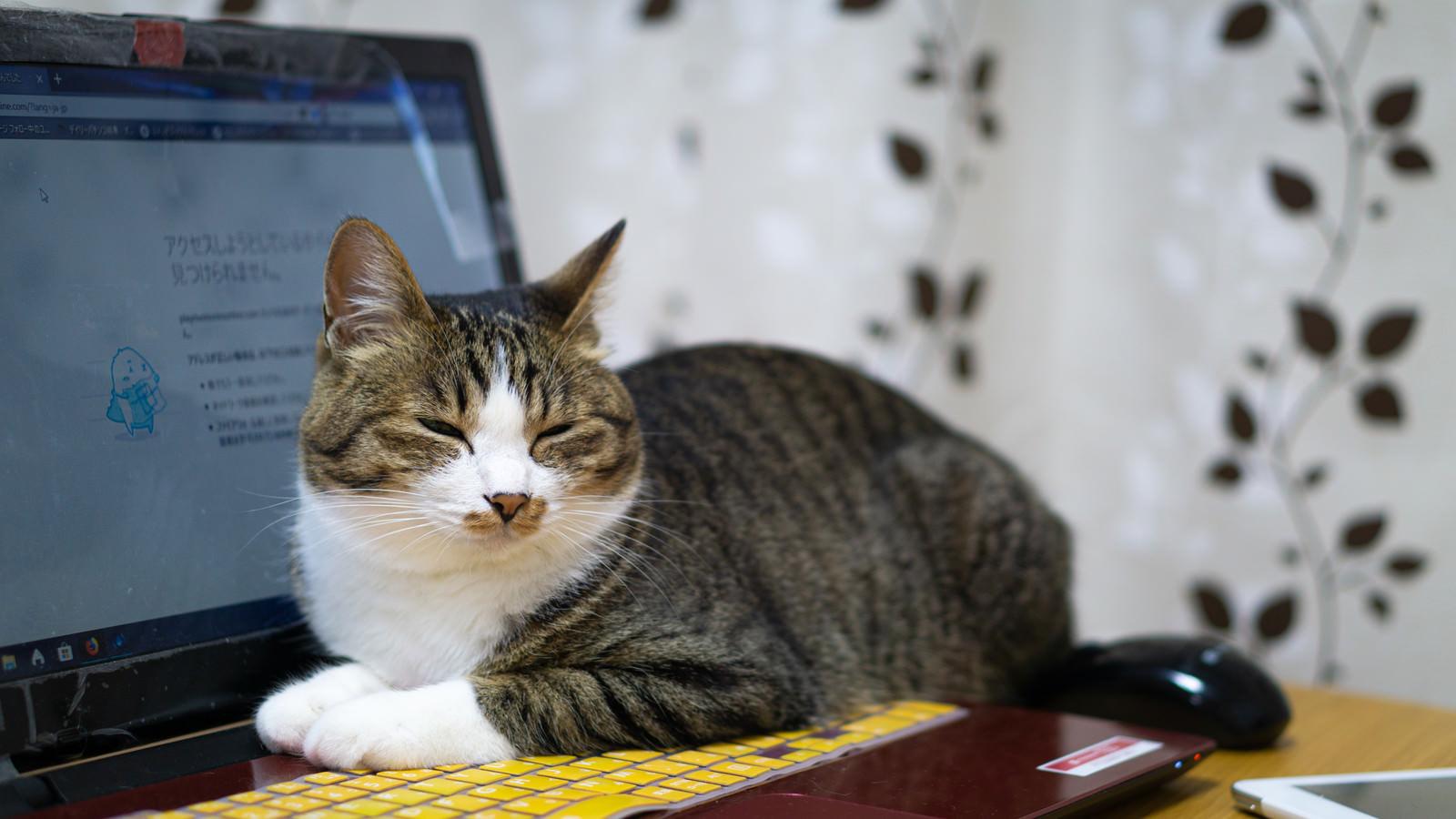 「今忙しいんから話しかけないでもらえますかね(猫)」の写真