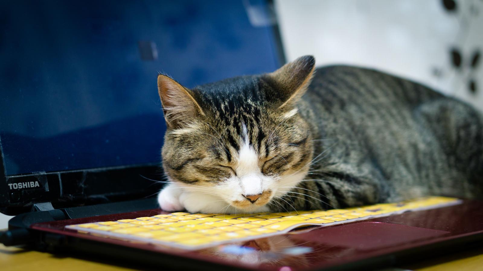 ノートpcの熱が暖かくて その上でうたた寝する猫 無料の写真素材は