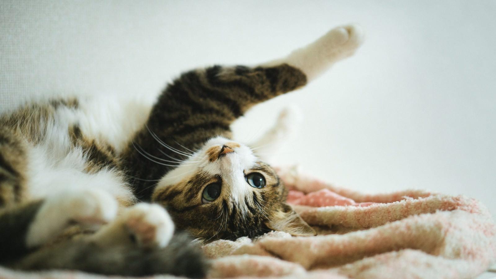 「ソイ!(猫)ソイ!(猫)」のフリー写真素材を拡大