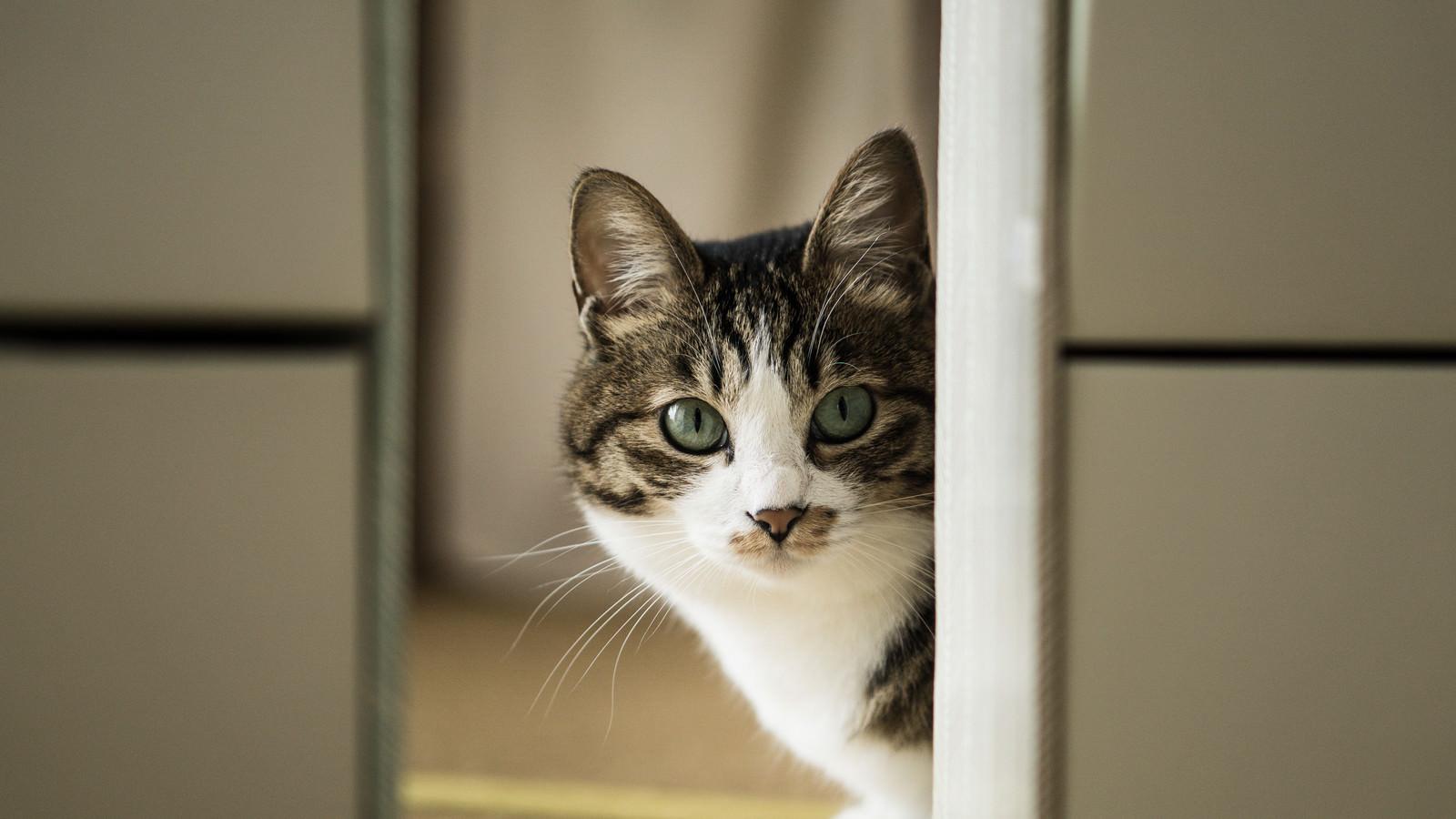 「餌の時間と聞いて(猫)」の写真