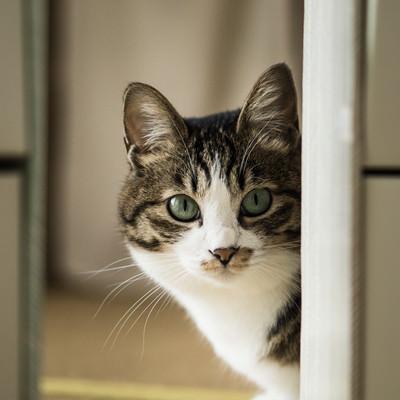 餌の時間と聞いて(猫)の写真