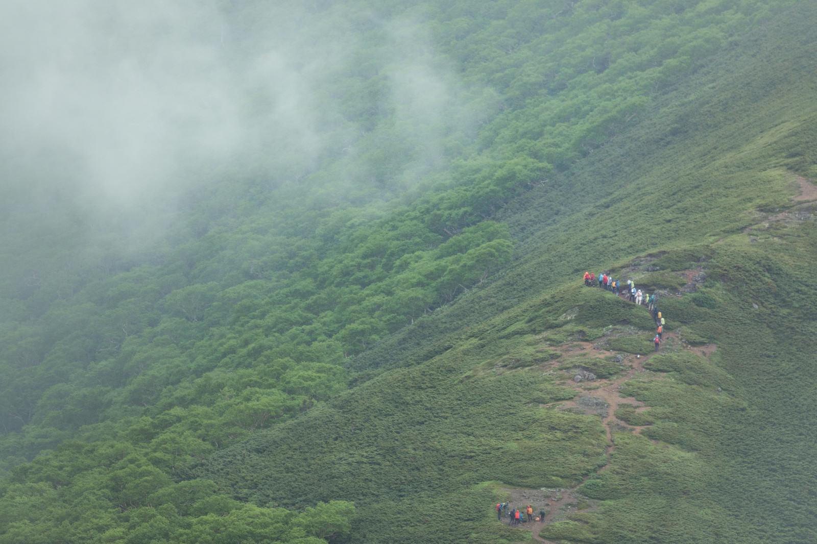 「森林限界付近を歩く登山者達」の写真