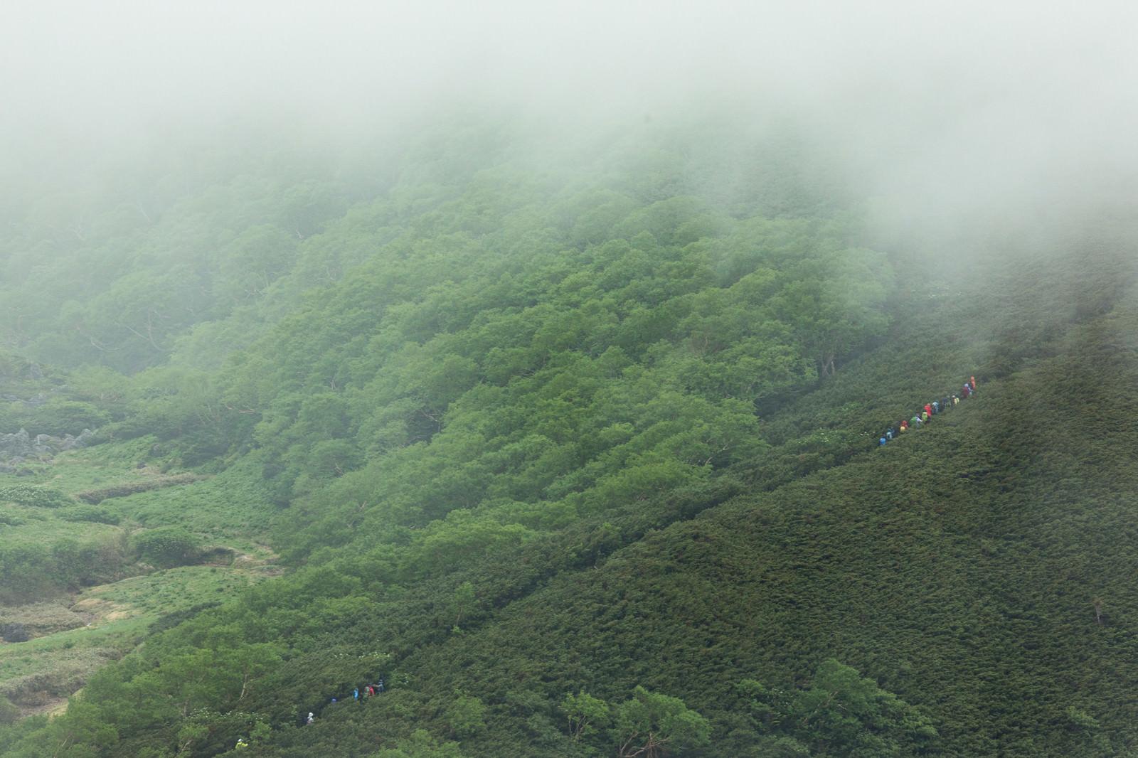 「霧が多い山の中をすすむ登山者一行」の写真