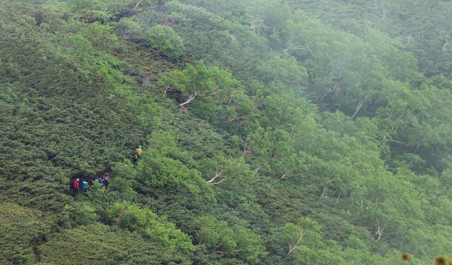 山の中を歩く登山者(乗鞍新登山道)の写真