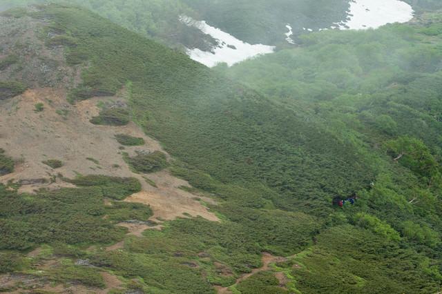 新緑の乗鞍新登山道を歩く登山者の写真