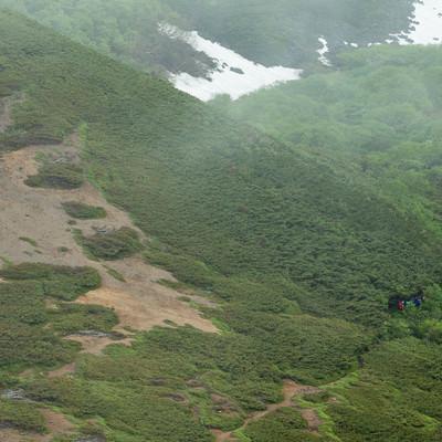 「新緑の乗鞍新登山道を歩く登山者」の写真素材