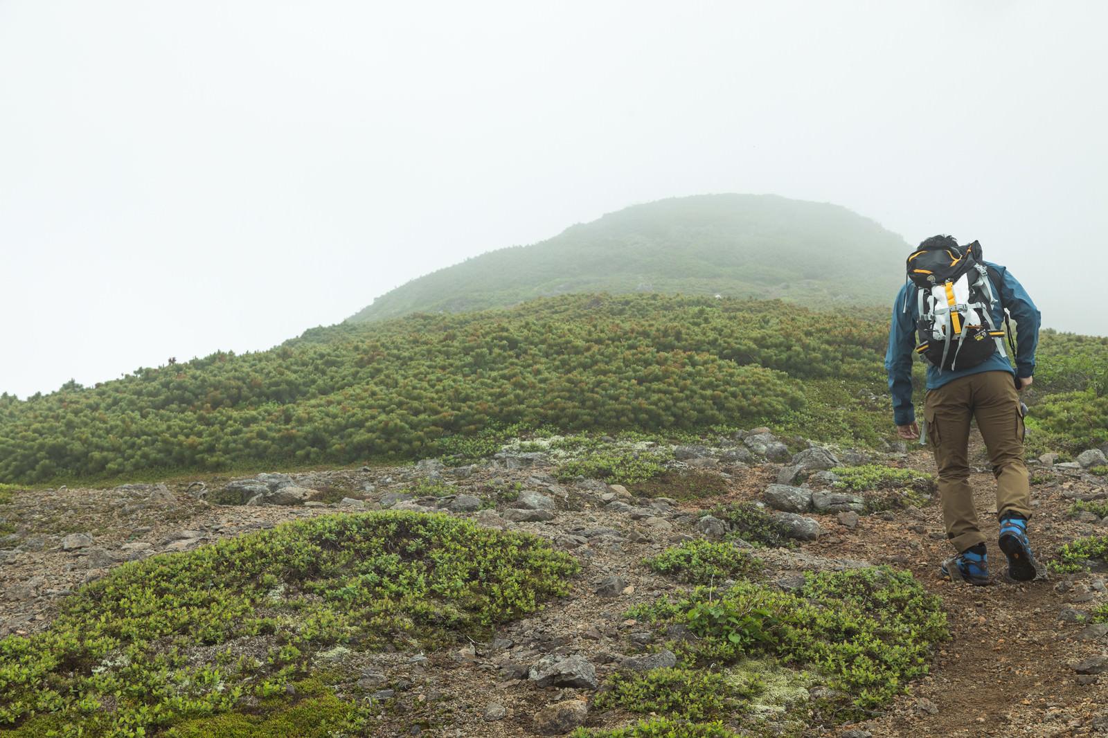 「傾斜のある登山道を歩く」の写真
