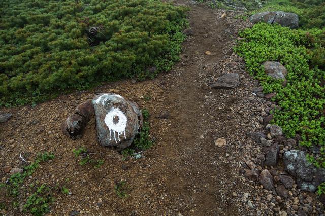 登山道の目印の写真