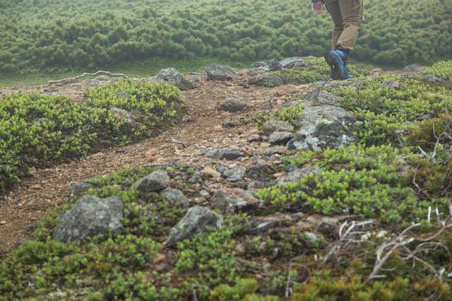 標高2,500mの森林限界を歩く登山者の足元の写真