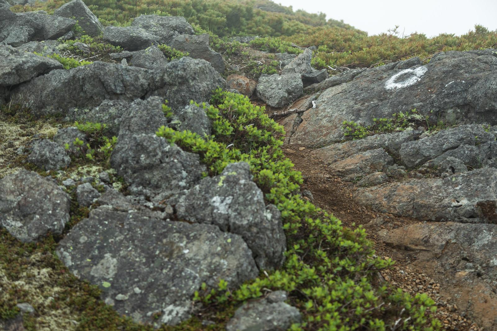 「乗鞍新登山道(硫黄岳付近)」の写真