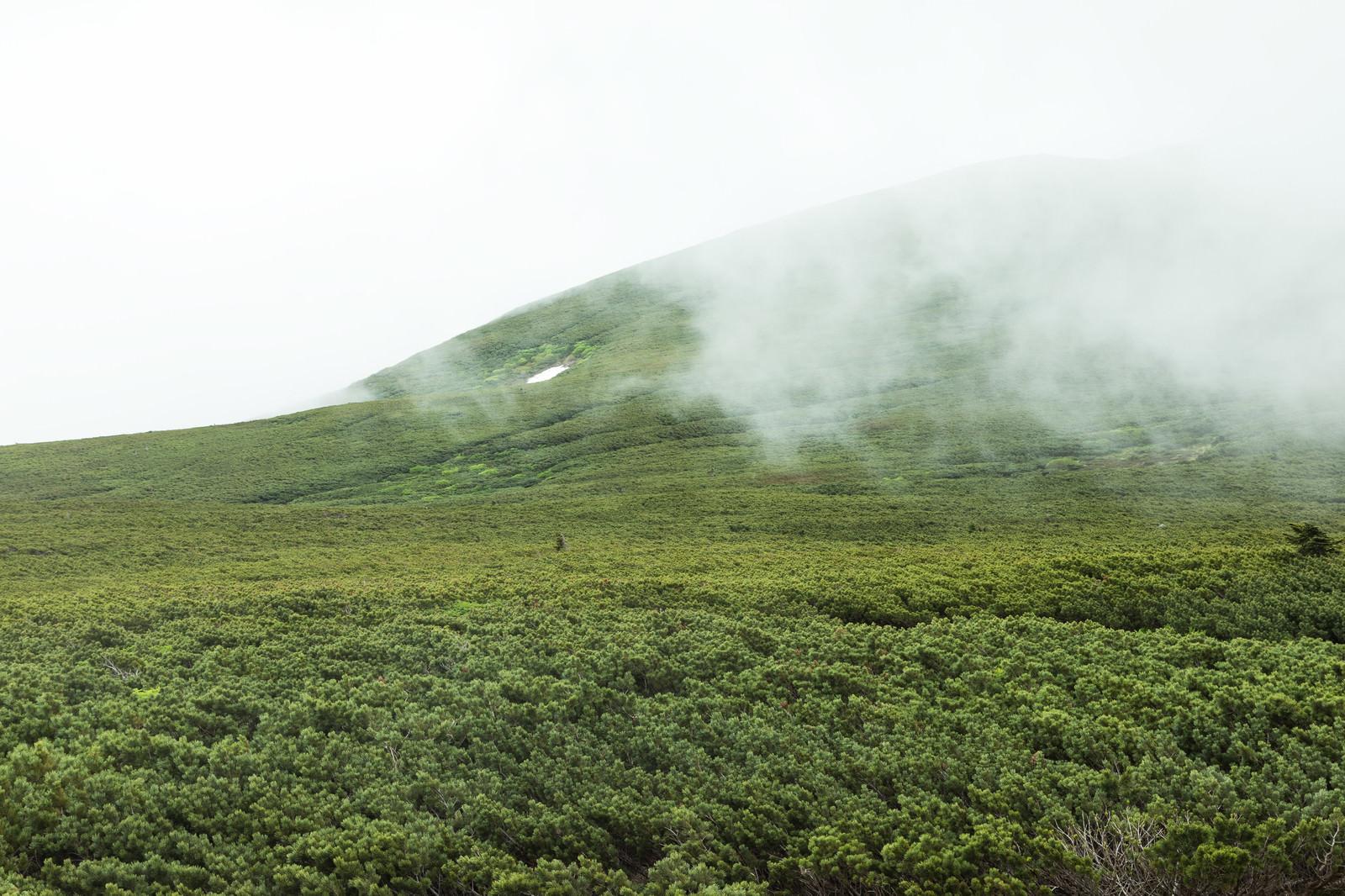 「ガスりはじめた山(森林限界)」の写真