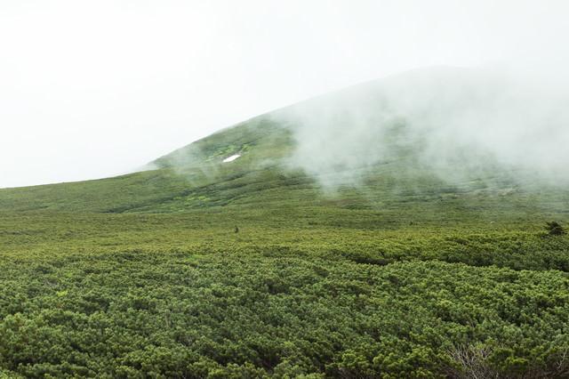 ガスりはじめた山(森林限界)の写真