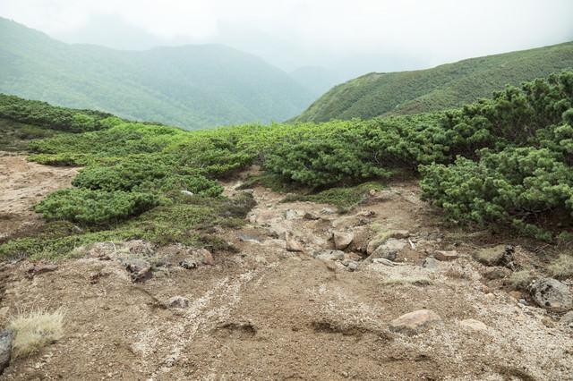 低木しか育たない標高が高い登山道の写真