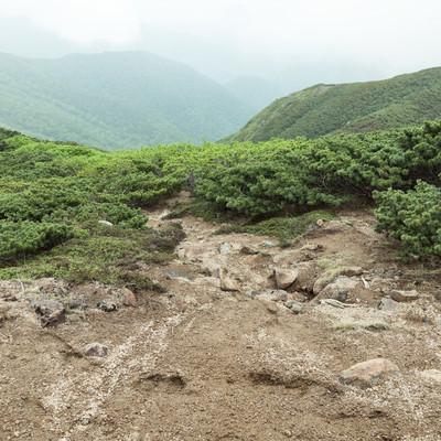「低木しか育たない標高が高い登山道」の写真素材