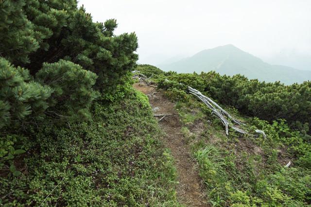 細い道が続く(乗鞍新登山道)の写真