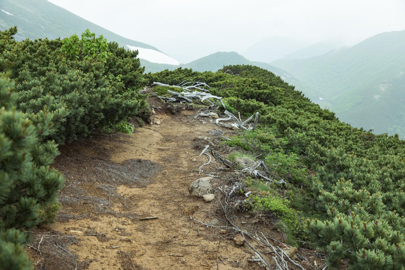 「枯れた木々と登山道」の写真