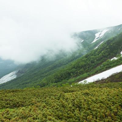 霧と渓谷の様子の写真