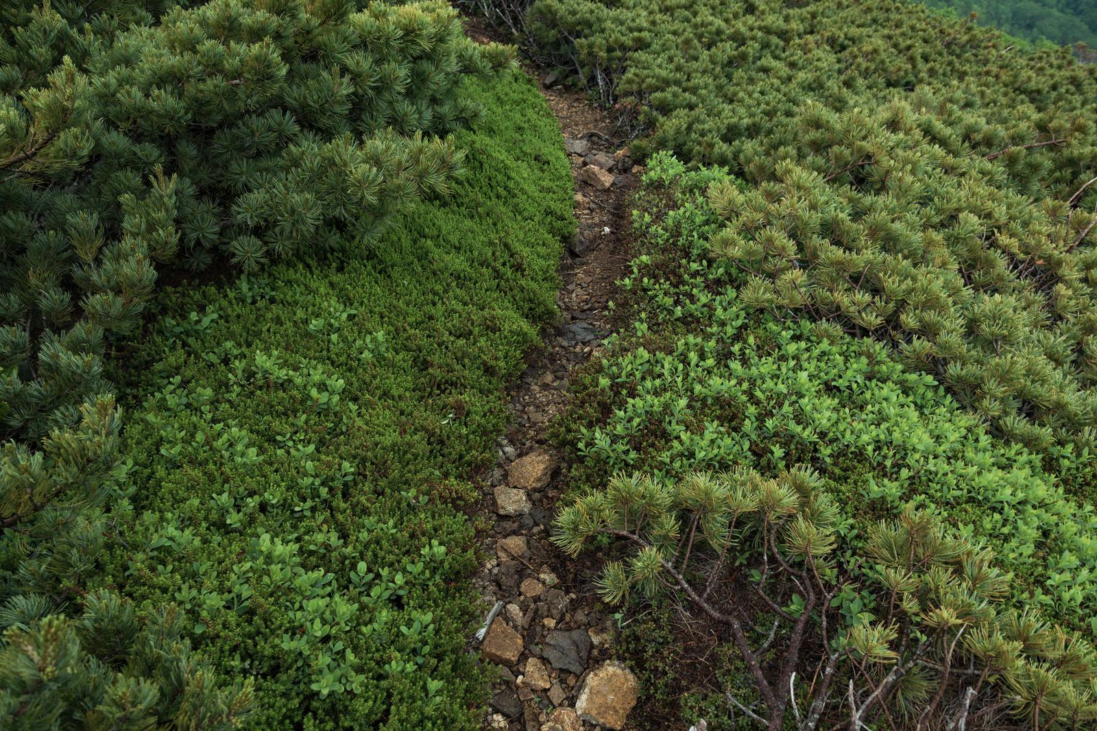 「人ひとりが歩ける幅の乗鞍新登山道」の写真