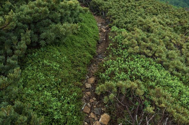 人ひとりが歩ける幅の乗鞍新登山道の写真