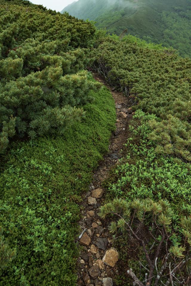 乗鞍新登山道の細道の写真