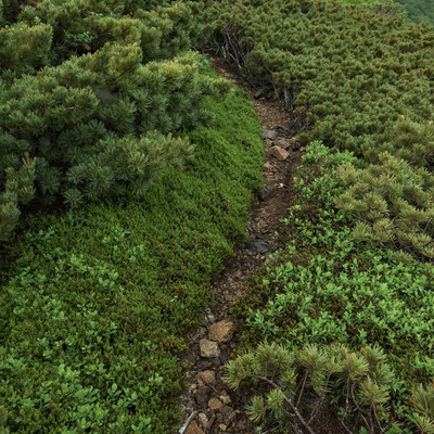 「乗鞍新登山道の細道」の写真素材