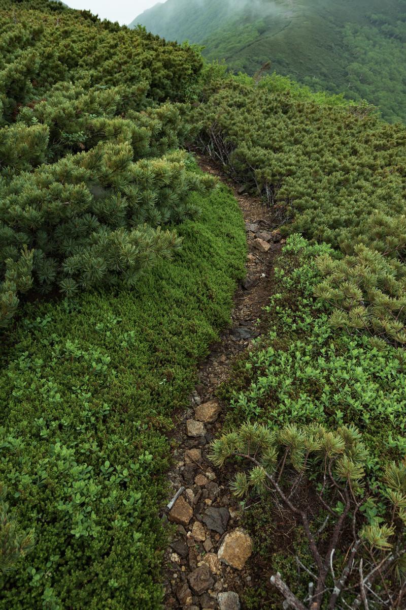 「乗鞍新登山道の細道」の写真