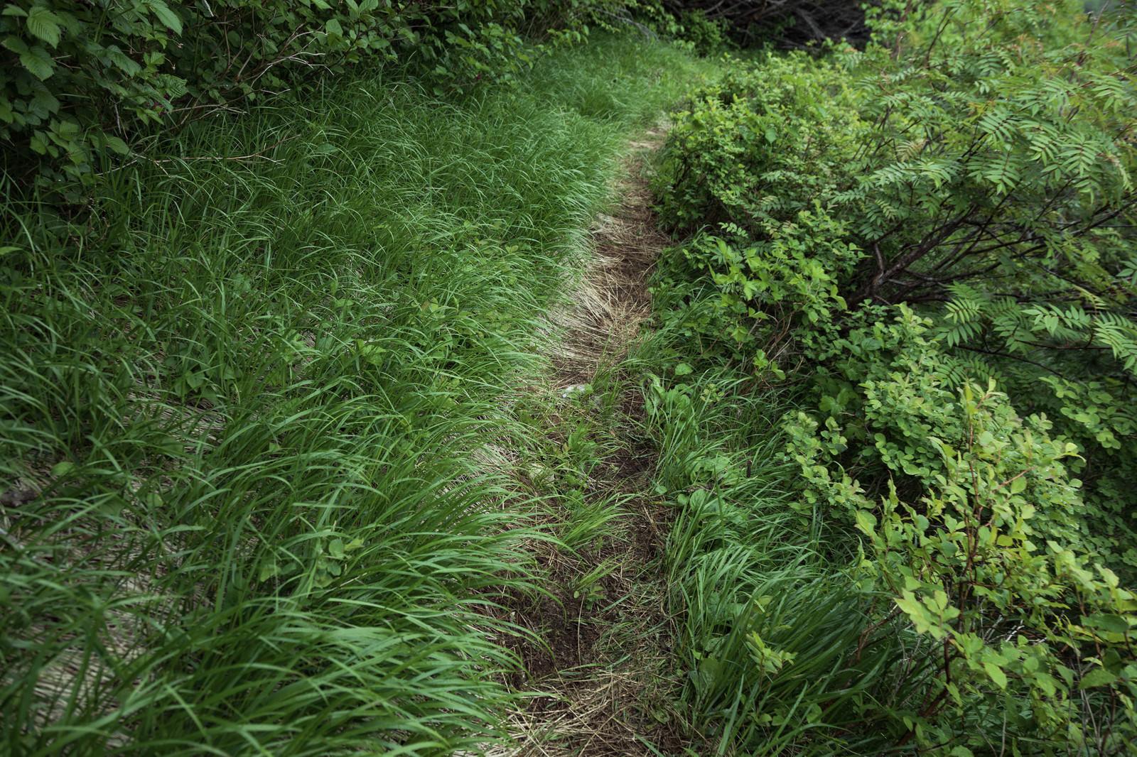 「草が生い茂る乗鞍新登山道」の写真