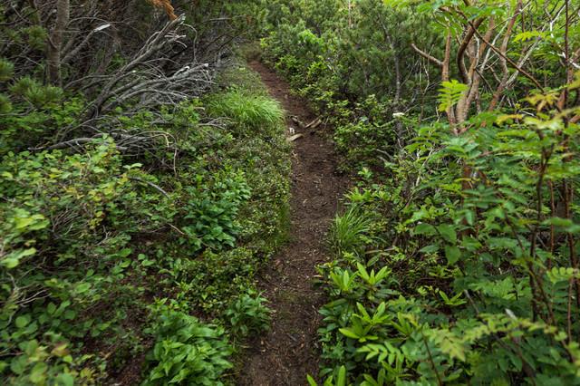 継続して整備し続ける必要がある乗鞍新登山道の写真