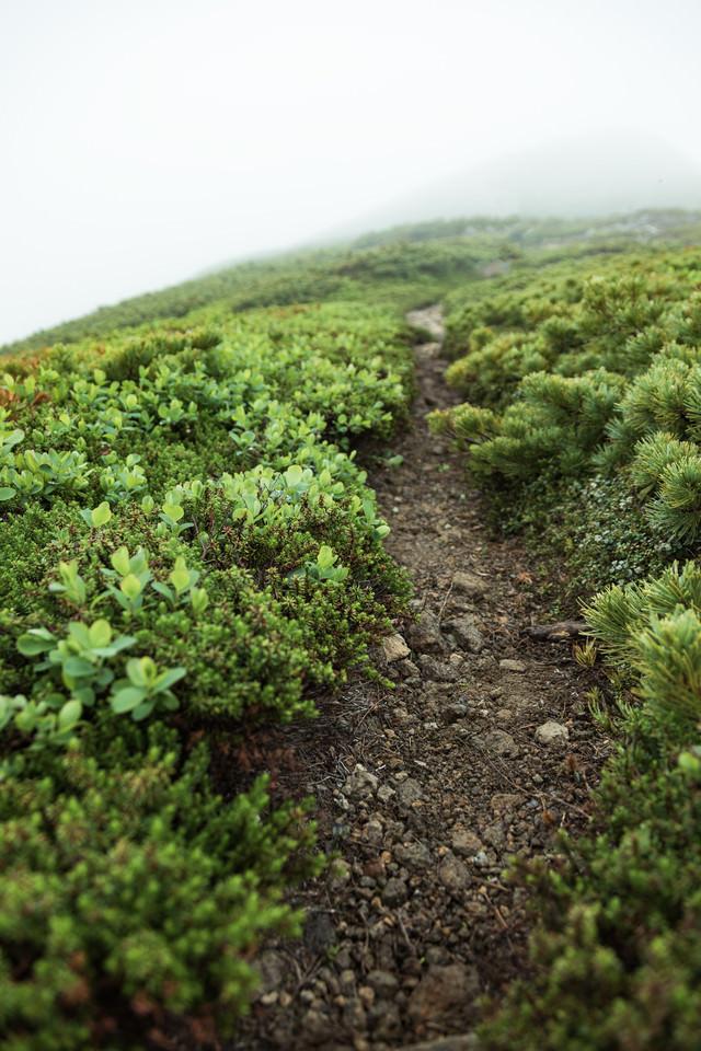 硫黄岳の山頂を目指す登山道の写真