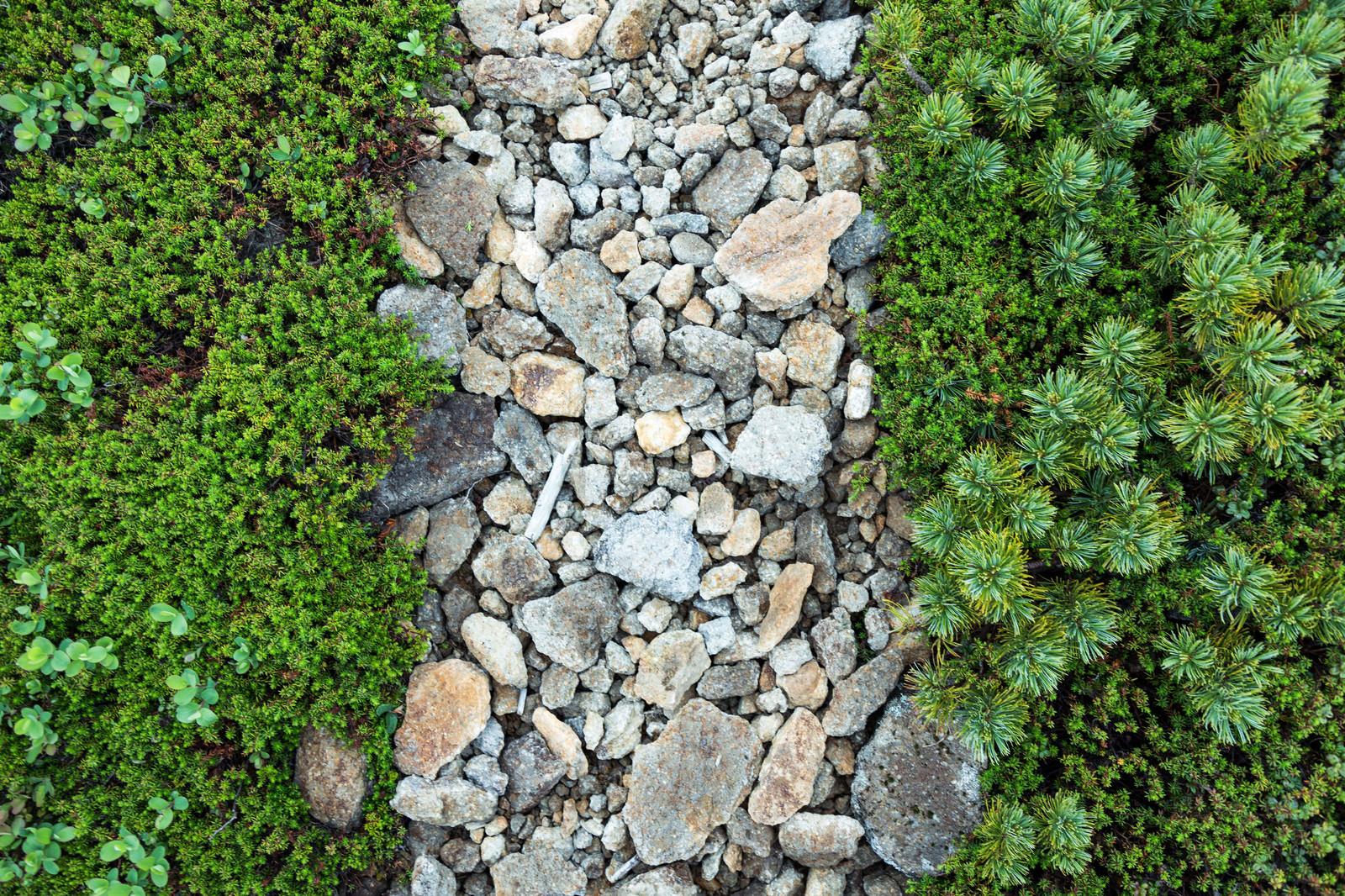 「石の道(乗鞍新登山道)」の写真