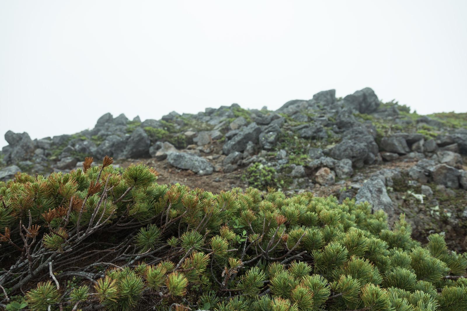 「ハイマツと山頂付近の岩場」の写真