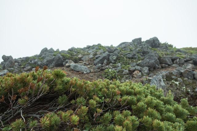 ハイマツと山頂付近の岩場の写真