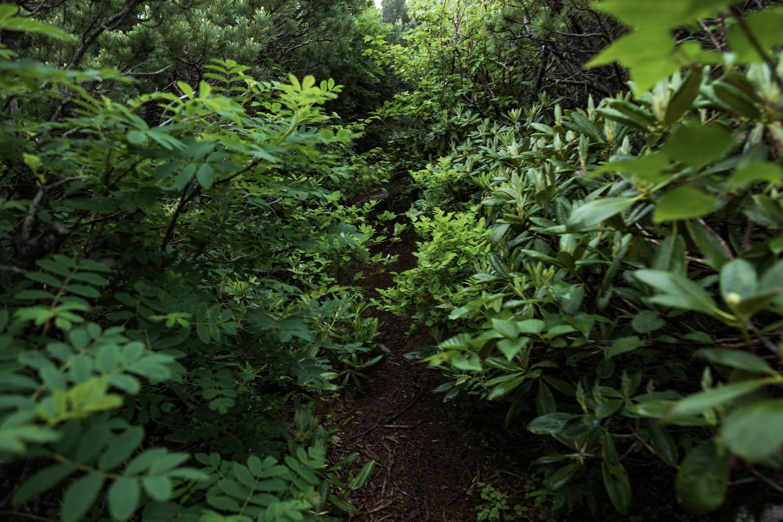 「植物が生い茂る乗鞍新登山道植物が生い茂る乗鞍新登山道」のフリー写真素材を拡大