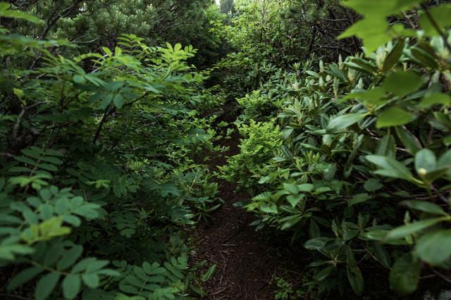 植物が生い茂る乗鞍新登山道の写真