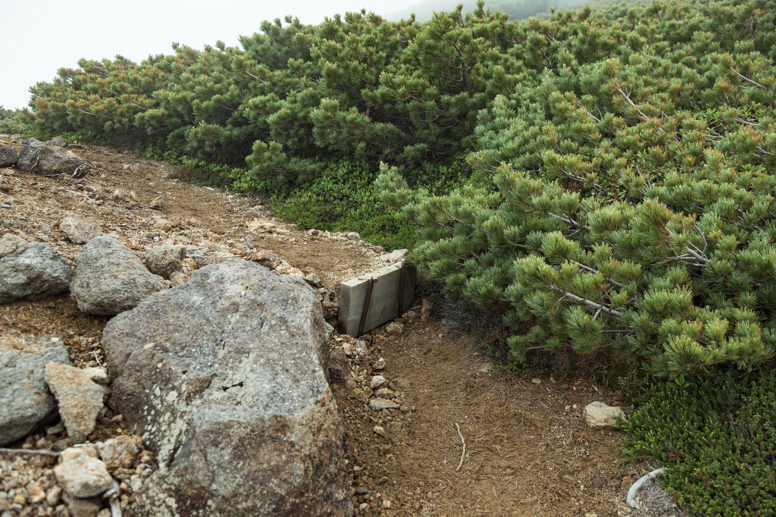 「乗鞍新登山道の整備された木の階段」の写真