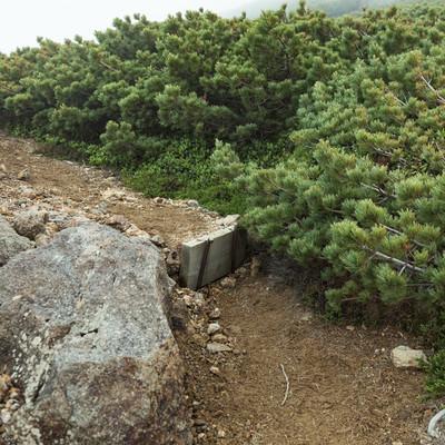 乗鞍新登山道の整備された木の階段の写真