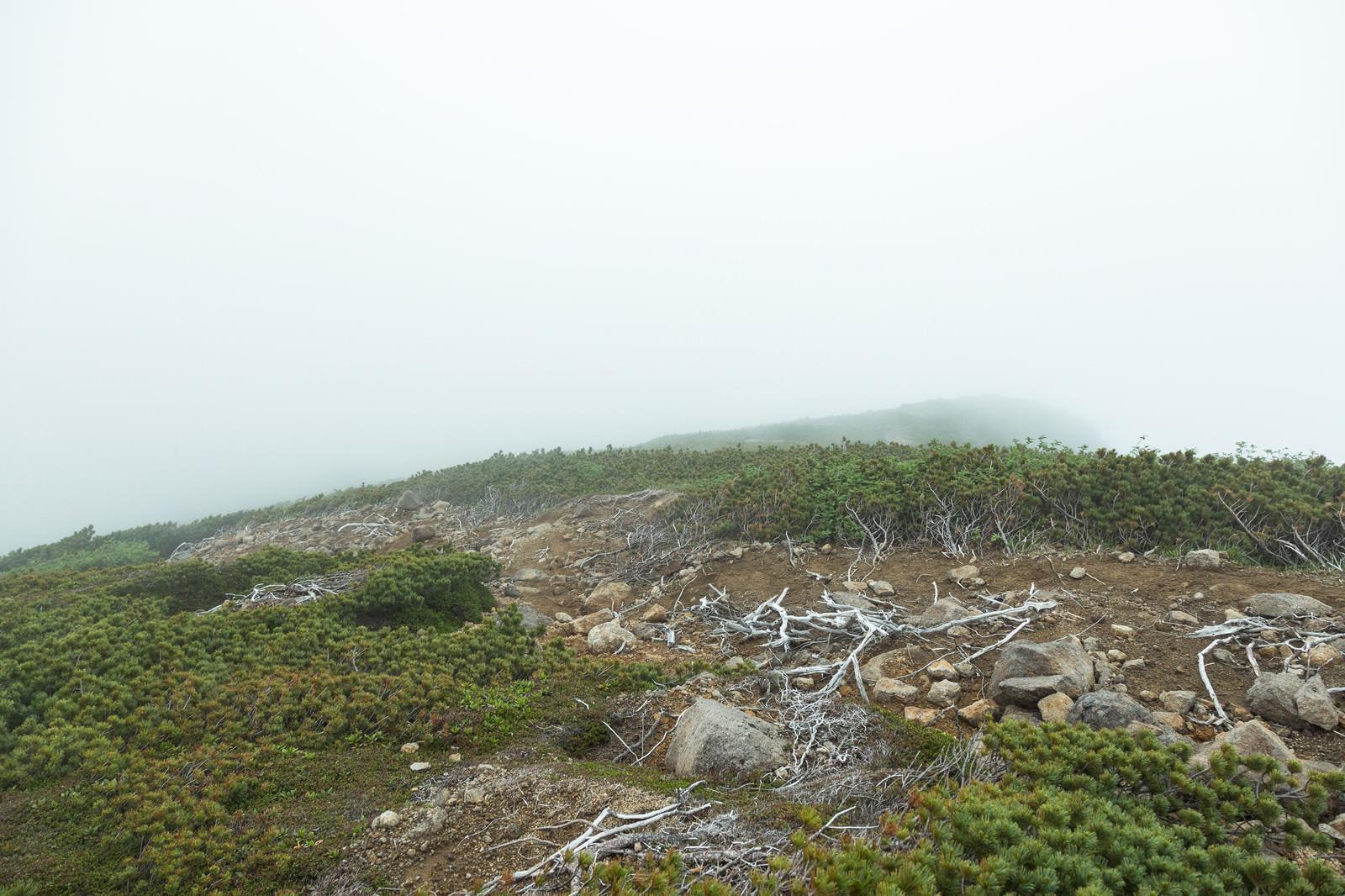 「霧で頂上が見えない(乗鞍新登山道)」の写真