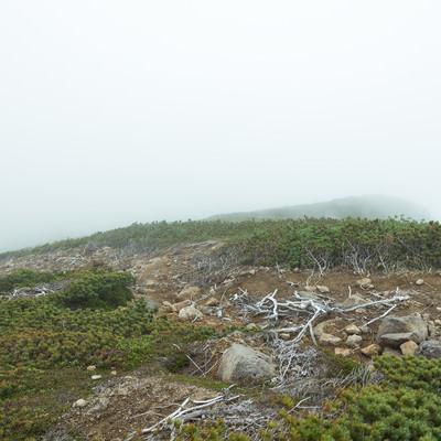 霧で頂上が見えない(乗鞍新登山道)のフリー素材