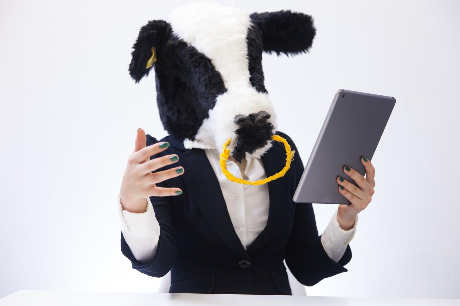 「タブレットを見ながら重要な情報を伝えようと必死な新卒の牛」の写真[モデル:古性のっち]