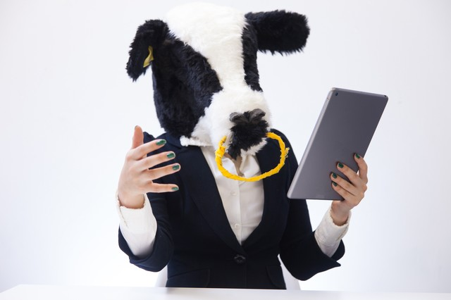 タブレットを見ながら重要な情報を伝えようと必死な新卒の牛の写真
