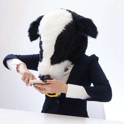 「スマホゲームに必死なエト牛」の写真素材