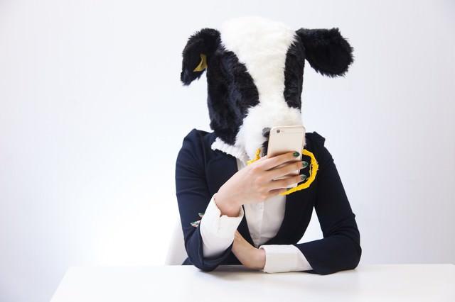 スマホでニュースサイトをチェックする牛の写真