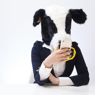 「スマホでニュースサイトをチェックする牛」の写真素材