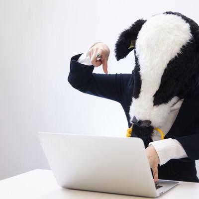 「投稿前に記事の推敲を行う牛ブロガー」の写真素材