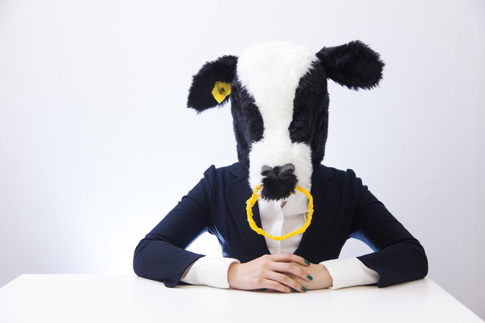 「指示待ちの牛」の写真[モデル:古性のっち]
