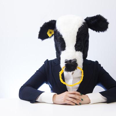 「指示待ちの牛」の写真素材