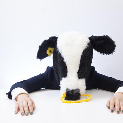 「人間社会に消耗して力尽きた牛コンサルタント」の写真素材